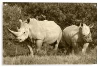 White Rhino and baby, Acrylic Print