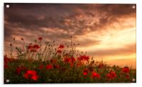 Poppy Sunset, Acrylic Print