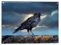 Rook on the Roof., Acrylic Print