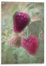 Raspberries, Acrylic Print