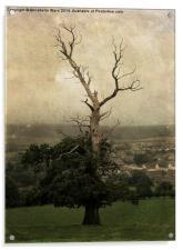 The Skeletal Tree, Acrylic Print