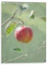Apple of my Eye., Acrylic Print