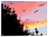 Murder by Sunset, Acrylic Print