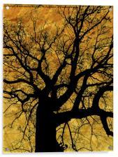 Oak tree in yellow., Acrylic Print