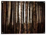 Trunks, Acrylic Print