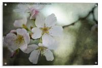 Kiss of Blossom, Acrylic Print