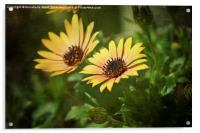 Spring Flower Smile., Acrylic Print