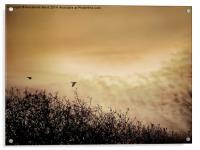 Fly By Dawn, Acrylic Print