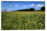 Wild Flowers Meadow, Acrylic Print
