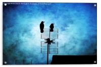 Two Crow Blues, Acrylic Print