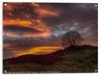 Dramatic sunset - tree on a hill, Acrylic Print
