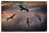 Pelican Sky, Acrylic Print