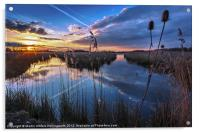 Reeds & Reflections, Acrylic Print