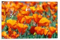 Field of Orange, Acrylic Print