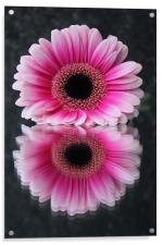 Gerbera - Reflections of Beauty, Acrylic Print
