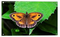 Gatekeeper Butterfly.., Acrylic Print
