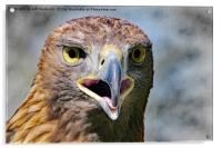 Portrait of a Golden Eagle, Acrylic Print