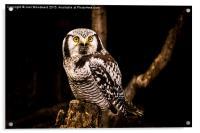 The Great Horned Owl, Acrylic Print