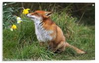 """Ah Daffodils"", Acrylic Print"