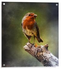 Early Bird, Acrylic Print
