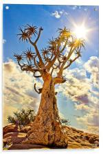 Quiver Tree, Acrylic Print
