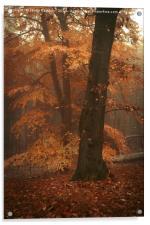 Misty Woods, Acrylic Print