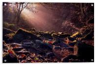 West Beck, Acrylic Print