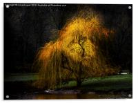 Weeping Gold, Acrylic Print