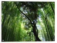 Jizo-in, Kyoto, Bamboo Temple, Acrylic Print
