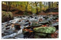 Autumnal colours in Roddlesworth - Tockholes woods, Acrylic Print