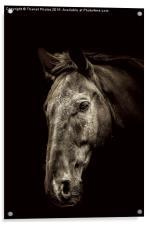 The Horse, Acrylic Print