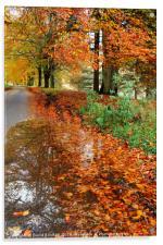 Derbyshire Leafy Lane in Autumn, Acrylic Print