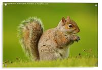 Just a Squirrel, Acrylic Print
