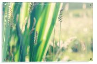 Grass And Wild Iris Leaf Abstract, Acrylic Print
