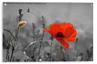 Pop-E Poppy, Acrylic Print