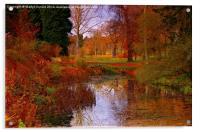 Autumns Golden Colour, Acrylic Print