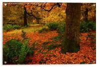 Woodland Trees, Acrylic Print