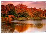 Autumn Sunset at Hardwick Park, Acrylic Print