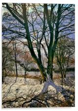 Winter Trees, Acrylic Print