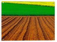 Crops, Acrylic Print