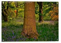 Magical Spring Woodland, Acrylic Print