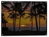 Borneo Palms, Acrylic Print