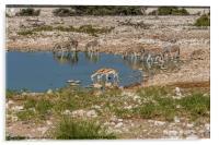 Namibian Waterhole at Etosha National Park, Acrylic Print