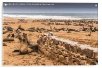 Cape Cross Fur Seals - Namibia, Acrylic Print