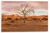 Sossusvlie Tree at Dawn, Namibia, Acrylic Print