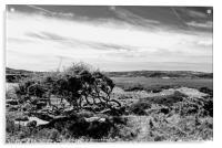 Fishguard Bay from East, Acrylic Print