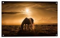 Gower pony at sunset on Cefn Bryn, Acrylic Print
