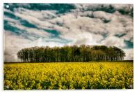 Sky, Trees, Flowers, Acrylic Print