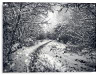 Snow Path, Acrylic Print