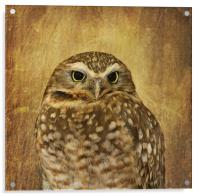Owl, Acrylic Print